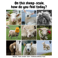 Sheep Scale 1-9 Meme | Wool For Every Day